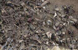 Cimitirul cailor de la Brates, o bomba biologica pentru Galati