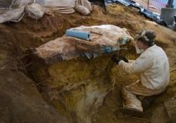 Fosilele unui nou tip de reptila zburatoare au fost descoperite in Romania