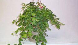Lista plantelor toxice de apartament sau de gradina este surprizator de lunga