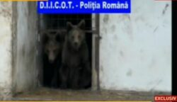 Leii si ursii fratilor Camataru au fost confiscati