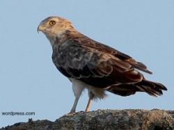 Camere video online de monitorizare a pasarilor din Muntii Macinului