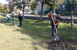 Un samarean a fost amendat de politia locala ca a plantat trei copaci