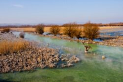 Ministri ai mediului din mai multe state, prezenti zilele acestea la Tulcea