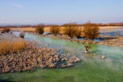Viata salbatica din Delta Dunarii