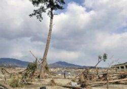 Japonezii au transformat in statuie un copac care a rezistat unui tsunami