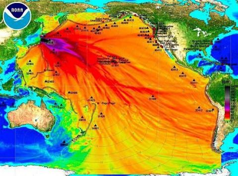 Accidentul nuclear de la Fukushima a crescut riscul apari?iei cancerului