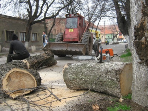 Arbori sacrificati in numele sigurantei
