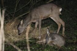 Cote noi pentru vânătorii de căpriori, cerbi şi păsări