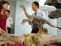Primele p?s?ri de pe Terra aveau patru aripi, afirm? paleontologii chinezi