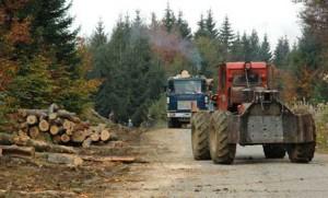 Polueaza apele fara sa le pese / Garda de Mediu, cu ochii pe firmele de exploatare a lemnului