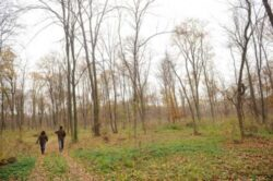 Circa 70 hectare de teren degradat au fost impadurite in patru sate ale comunei