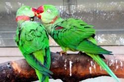 Creierul unor pasari este capabil de autocontrol, potrivit unui studiu