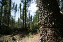 Romania risca sa ramana fara paduri