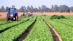 Agricultura durabila: prezent si viitor