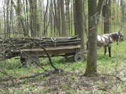 Padurari agresati, arbori taiati ilegal si barierele cu lacate de pe drumurile forestiere furate