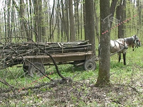 P?durari agresa?i, arbori t?ia?i ilegal ?i barierele cu lac?te de pe drumurile forestiere furate