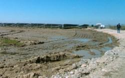 Cine ecologizeaza zona din jurul investitiilor... verzi?