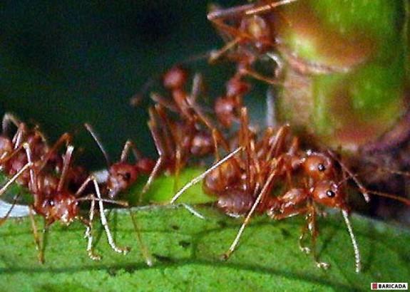 Furnicile ar putea salva lumea de înc?lzirea global?