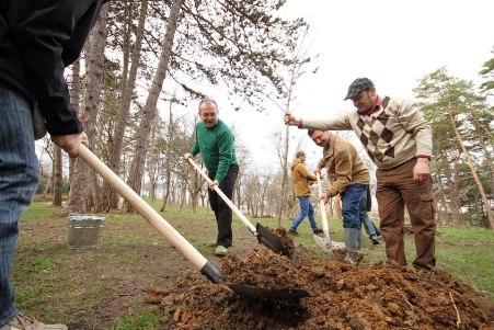 O noua actiune de plantare a pomilor in centrul Iasului