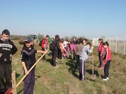 O mie doua sute de puieti plantati la groapa ecologica de la Doba