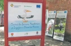 Clinica de urgenta pentru pasarile salbatice ranite, la Timisoara