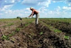 Solurile Romaniei permit dezvoltarea produselor bio si agriculturii ecologice