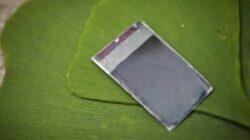 """""""Frunza artificiala"""" ar putea rezolva problema energiei prin fotosinteza"""