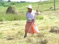 Calatoreste verde in Maramures (video)