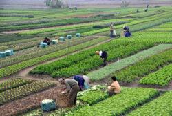 Ingrasamintele: sfarsitul agriculturii moderne
