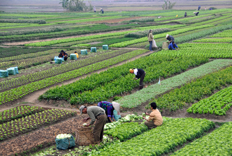 China cauta furnizori de vinuri si produse ecologice