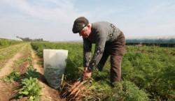 Agricultura ecologica, verificata