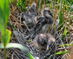 Minunea naturală din Larga Jijia, supranumită Delta Moldovei, locul unde poposesc anual peste 200 de specii de păsări exotice în drumul spre ţările calde