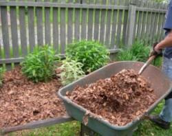 Mulcirea solului, o solutie eco impotriva buruienilor