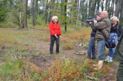 Paduri intregi au disparut din muntii Padurea Craiului