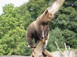 Au fost aprobate derogarile pentru vanatoare in cazul speciilor urs, lup si pisica salbatica