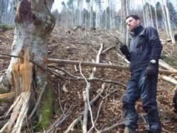Padurarii din ocoalele silvice private, cu mainile goale in fata hotilor de lemne