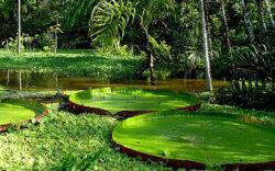 Inventarul padurii amazoniene: 90 de miliarde de arbori din 16.000 de specii