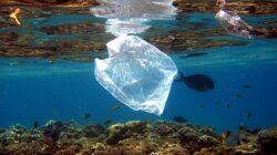 Pharrell Williams ajuta la curatarea oceanelor