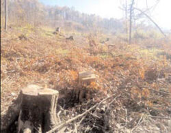 La Rosiile, in doar cateva zile, s-au defrisat ilegal peste 400 de hectare de padure