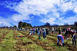 Invitatie a o actiune de plantare in judetul Constanta, la 10 km de Medgidia