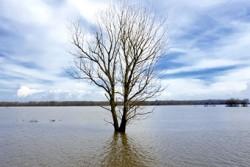 Cercetatorii indeamna spre dezvoltarea stiintelor si politicilor in directia adaptarii la schimbarile climatice