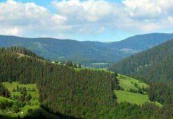 Fondul Bisericesc Ortodox al Bucovinei pierde procesul pentru cele 166.000 ha de padure din Suceava