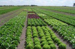 Agricultura ecologica, dupa reguli noi