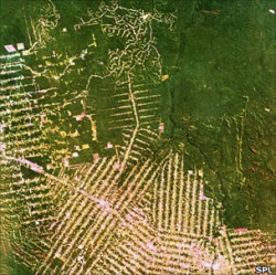 Peste 50.000 de kilometri de drumuri construite in Amazon in ultimii 3 ani