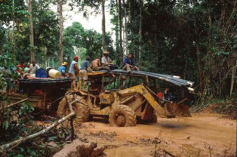 Ritmul distrugerii junglei amazoniene, în cre?tere cu 28%