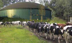 Statie de biogaz de 6 milioane euro la Ardud