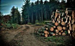 Cinci asociatii din domeniul forestier cer retragerea din Parlament a proiectului de modificare a Codului Silvic