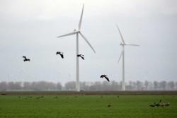 O companie eoliana acuzata ca a ucis 14 vulturi aurii si zeci de alte pasari, amendata cu 1 milion de dolari