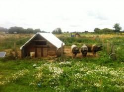 RoEnergy 2014: Exemplul fermierilor germani pentru fermierii romani