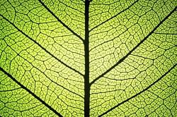 Un cercetator roman vrea sa transforme fotosinteza intr-o sursa de energie regenerabila